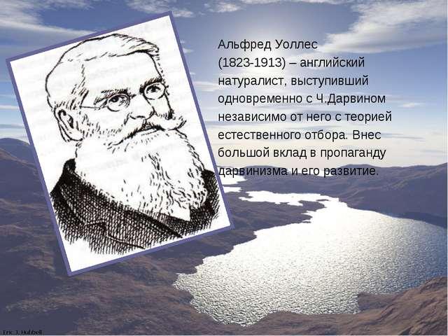 Альфред Уоллес (1823-1913) – английский натуралист, выступивший одновременно...