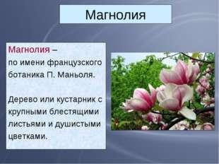 Магнолия Магнолия – по имени французского ботаника П. Маньоля. Дерево или кус