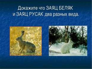 Докажите что ЗАЯЦ БЕЛЯК и ЗАЯЦ РУСАК два разных вида.