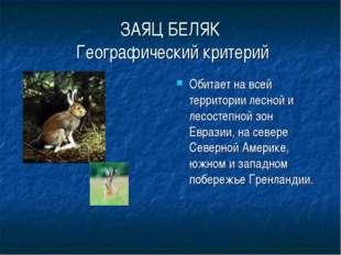 ЗАЯЦ БЕЛЯК Географический критерий Обитает на всей территории лесной и лесост