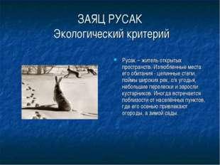 ЗАЯЦ РУСАК Экологический критерий Русак – житель открытых пространств. Излюбл