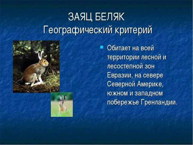 ЗАЯЦ БЕЛЯК Географический критерий Обитает на всей территории лесной и лесост...