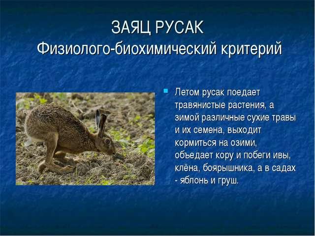 ЗАЯЦ РУСАК Физиолого-биохимический критерий Летом русак поедает травянистые р...