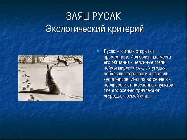 ЗАЯЦ РУСАК Экологический критерий Русак – житель открытых пространств. Излюбл...