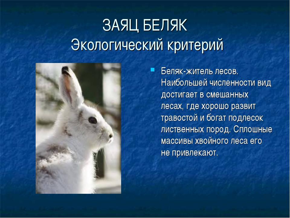 ЗАЯЦ БЕЛЯК Экологический критерий Беляк-житель лесов. Наибольшей численности...