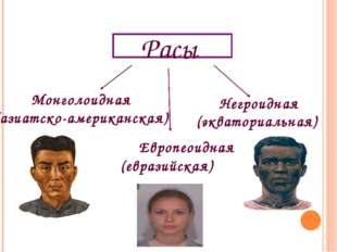 Расы Монголоидная (азиатско-американская) Европеоидная (евразийская) Негроидн