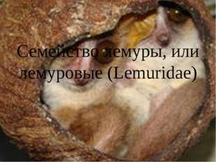 Семейство лемуры, или лемуровые (Lemuridae)