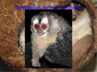 Мирикины, ночные обезьяны