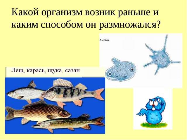 Какой организм возник раньше и каким способом он размножался?