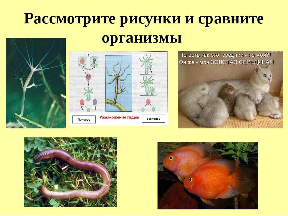 Рассмотрите рисунки и сравните организмы