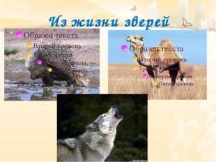 Из жизни зверей