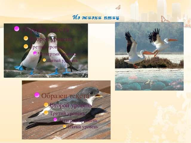 Из жизни птиц