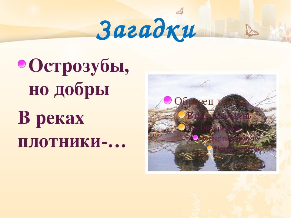 Загадки Острозубы, но добры В реках плотники-…