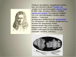 Первым человеком, увидевшим клетки, был английский учёныйРоберт Гук(известн