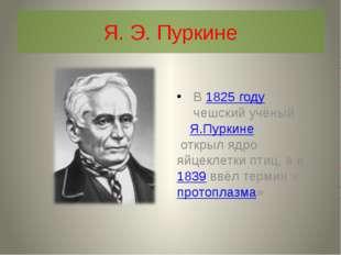Я. Э. Пуркине В1825 годучешский учёныйЯ.Пуркине открыл ядро яйцеклетки пт