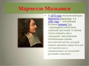 Марчелло Мальпиги В1675 годуитальянский врачМарчелло Мальпиги, а в1681 го