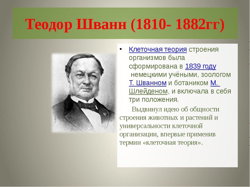 Теодор Шванн (1810- 1882гг) Клеточная теориястроения организмов была сформир...