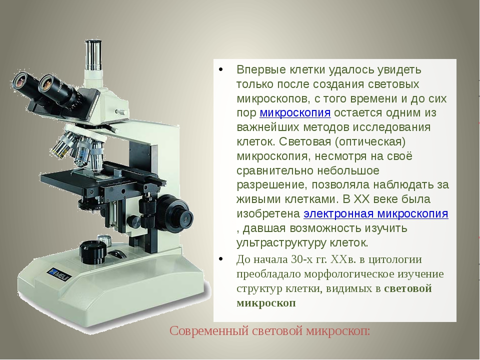 Впервые клетки удалось увидеть только после создания световых микроскопов, с...