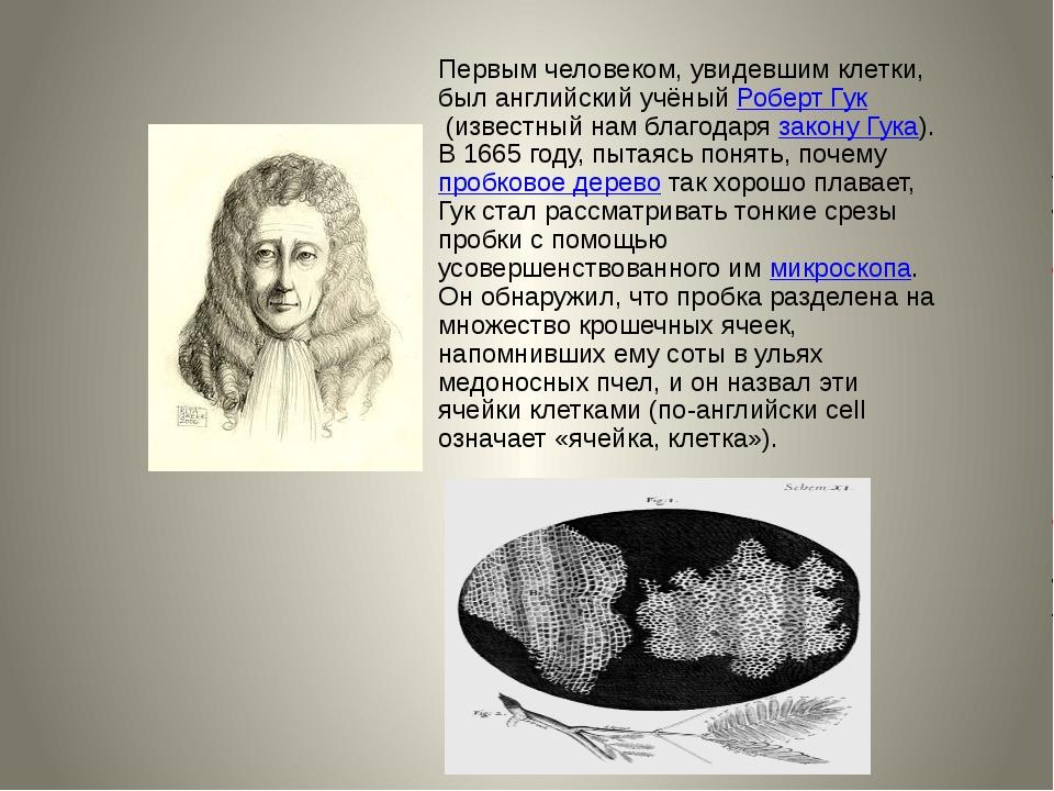 Первым человеком, увидевшим клетки, был английский учёныйРоберт Гук(известн...