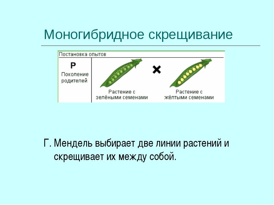 Моногибридное скрещивание Г. Мендель выбирает две линии растений и скрещивает...