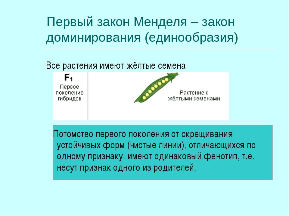 Первый закон Менделя – закон доминирования (единообразия) Все растения имеют...