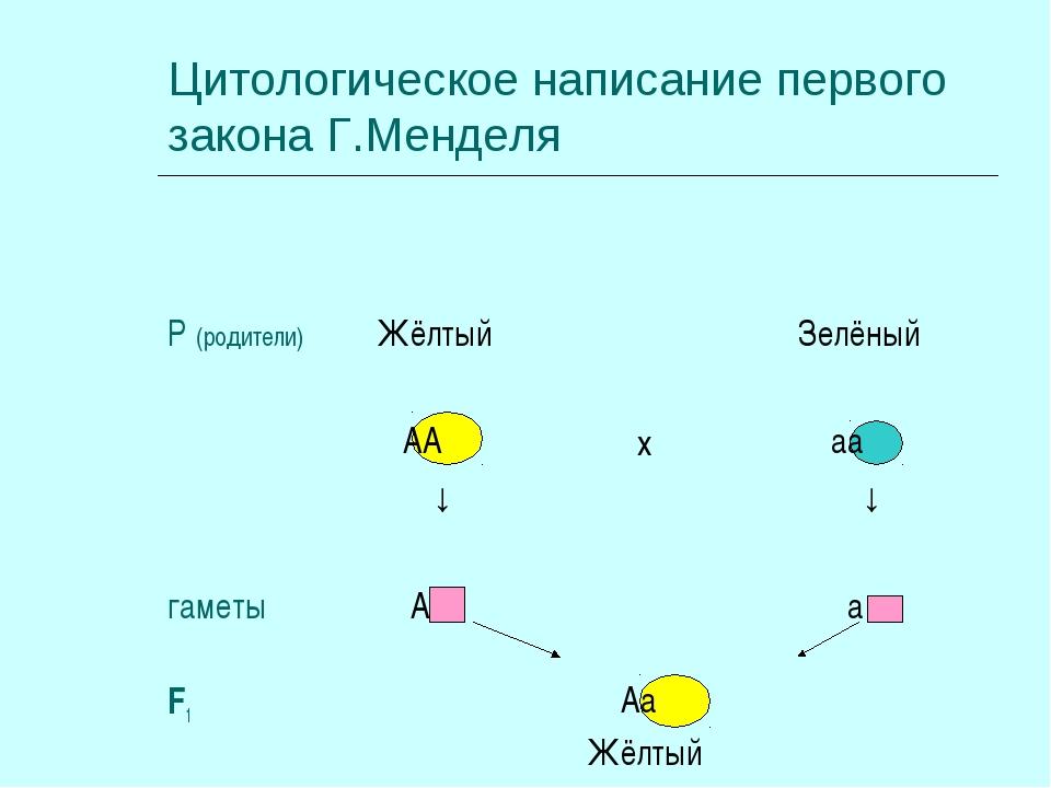 Цитологическое написание первого закона Г.Менделя Аа Жёлтый F1 а А гаметы аа...