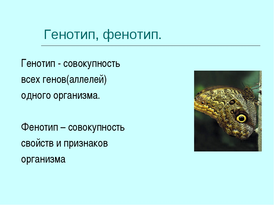 genotypes in organisms