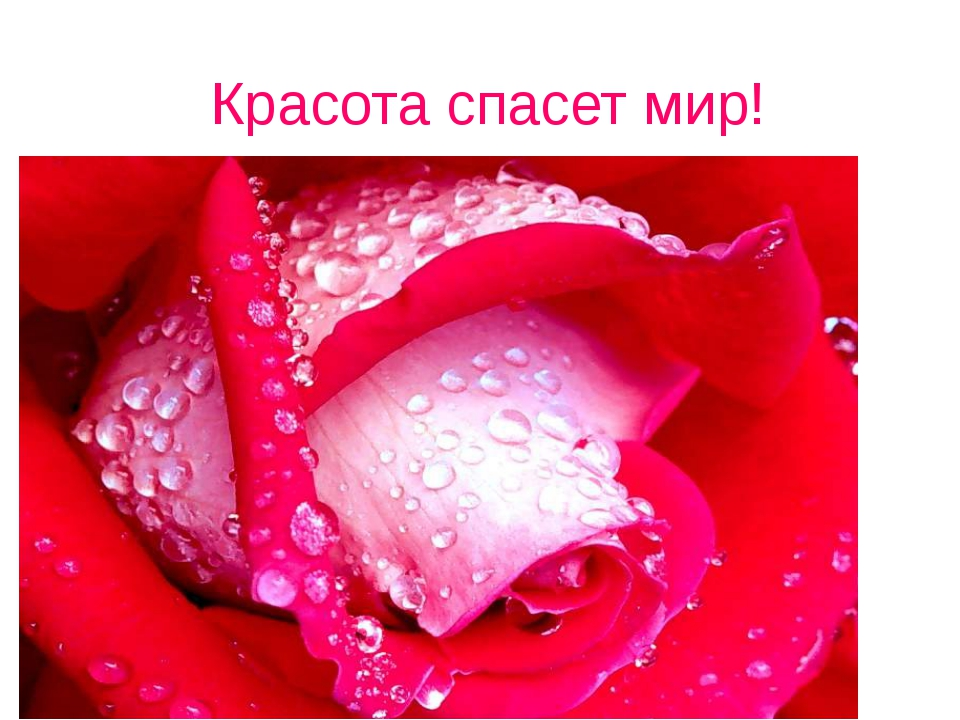 Красота спасет мир!