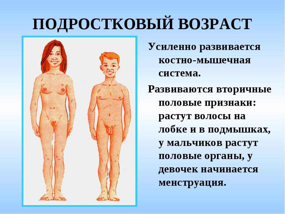 ПОДРОСТКОВЫЙ ВОЗРАСТ Усиленно развивается костно-мышечная система. Развиваютс...