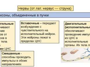 Смешанные - способны проводить импульсы в обоих направлениях Нервы (от лат. н