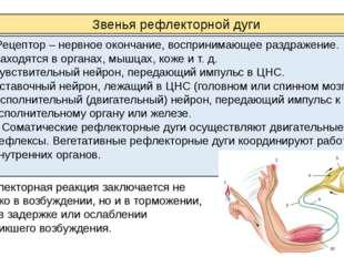Рецептор – нервное окончание, воспринимающее раздражение. Находятся в органа