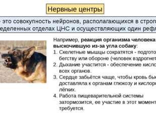 Например, реакция организма человека на выскочившую из-за угла собаку: Скелет