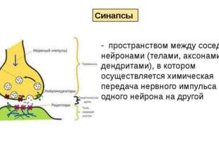 - пространством между соседними нейронами (телами, аксонами или дендритами),