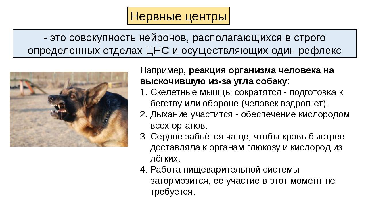 Например, реакция организма человека на выскочившую из-за угла собаку: Скелет...