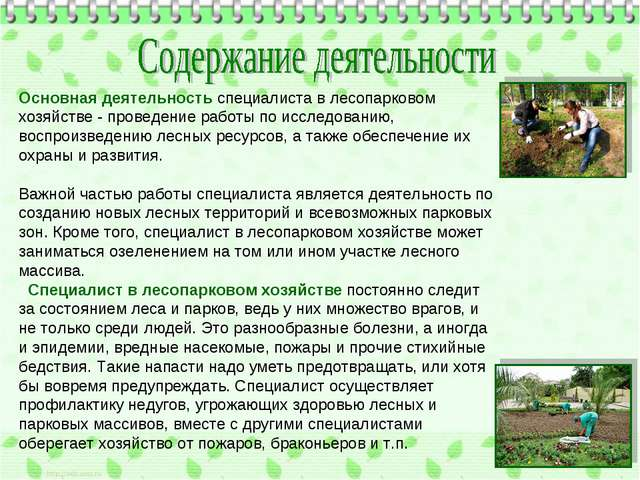 Основная деятельность специалиста в лесопарковом хозяйстве - проведение работ...