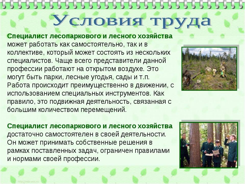 Специалист лесопаркового и лесного хозяйства может работать как самостоятельн...