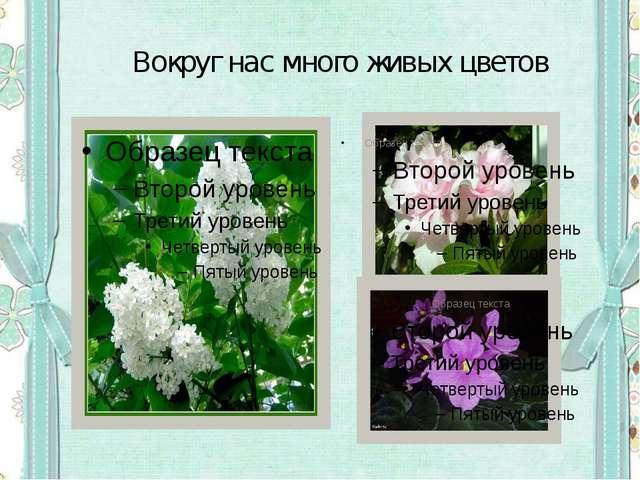 Вокруг нас много живых цветов