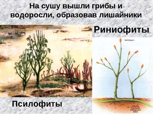 На сушу вышли грибы и водоросли, образовав лишайники Псилофиты Риниофиты
