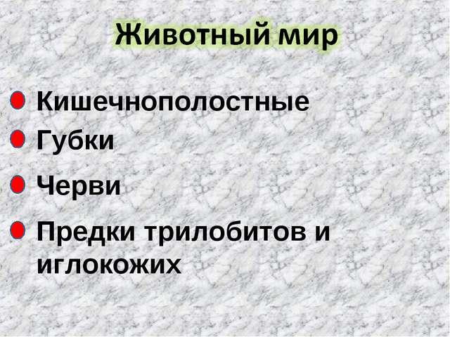 Кишечнополостные Губки Черви Предки трилобитов и иглокожих