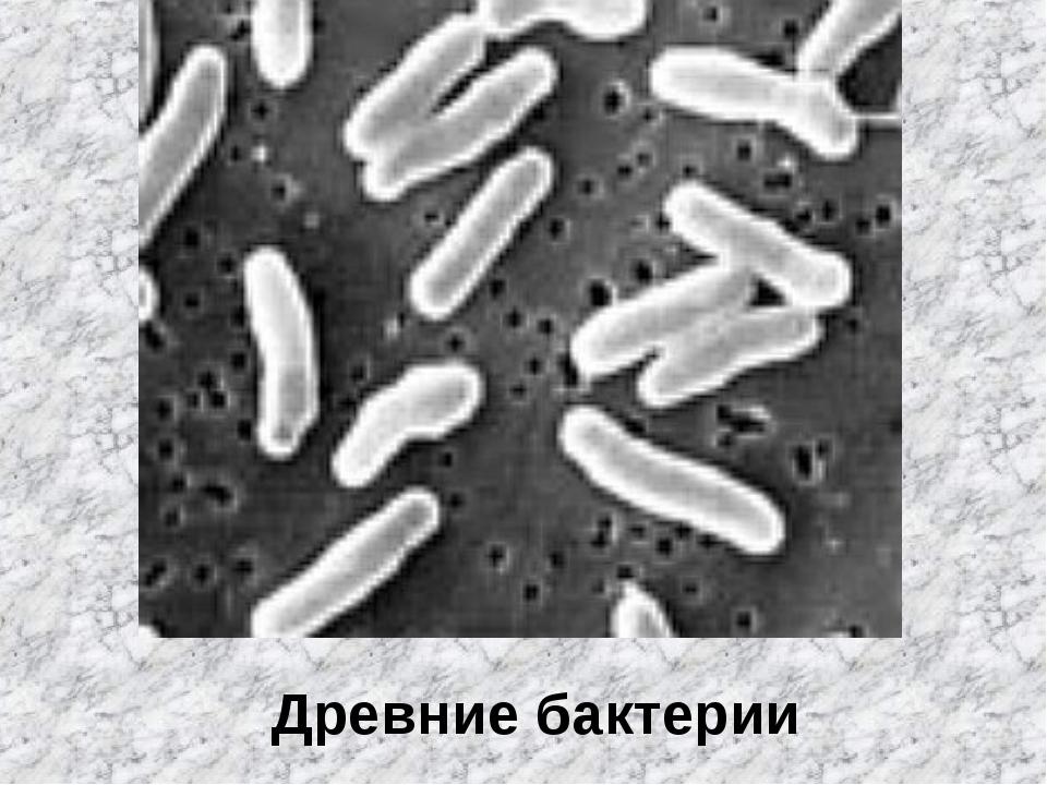 Древние бактерии
