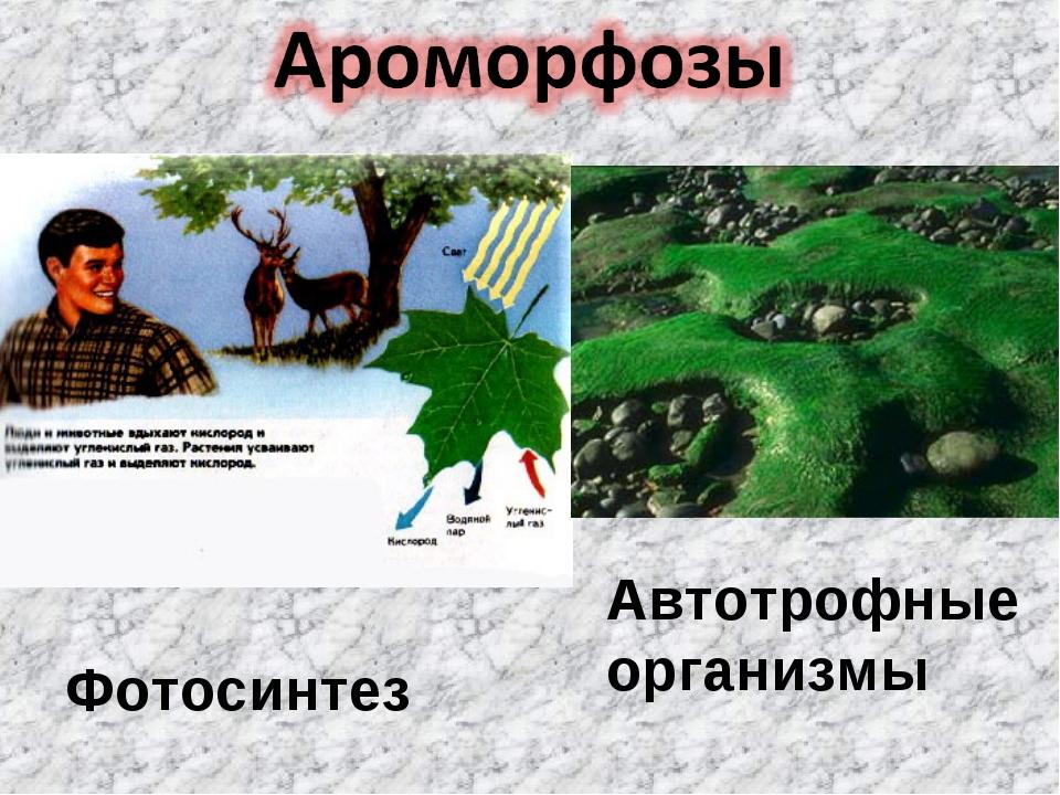 Фотосинтез Автотрофные организмы