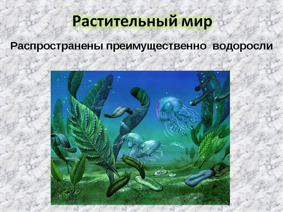 Распространены преимущественно водоросли