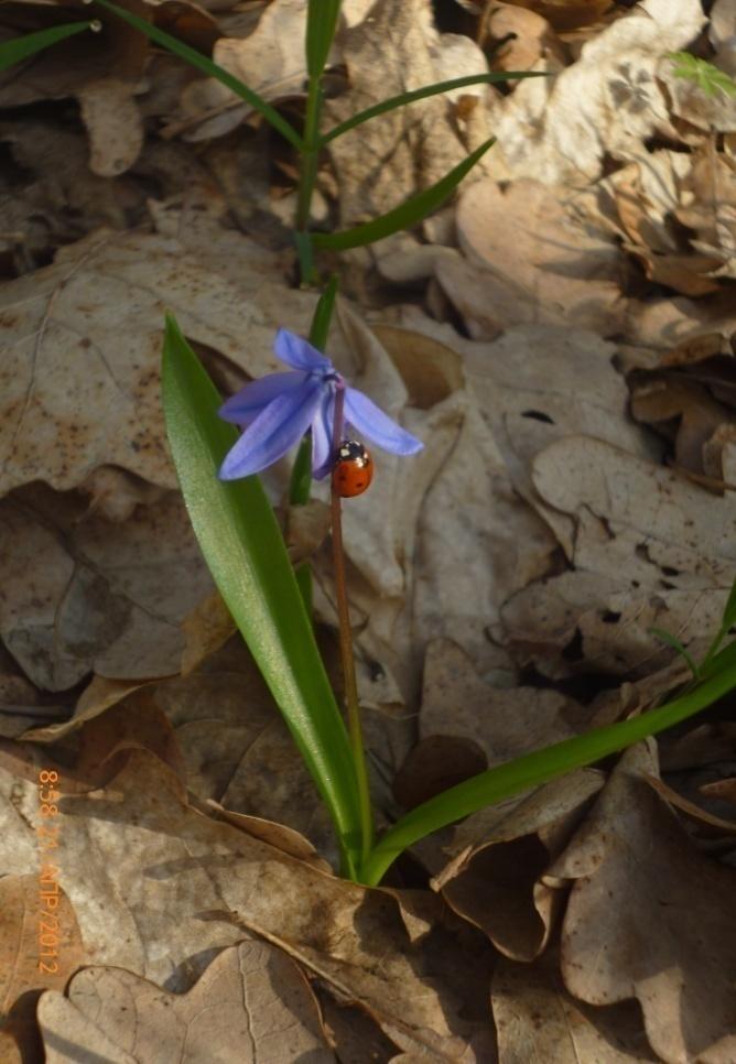 D:\Документы\фото о природе\первоцветы\P1020156.JPG