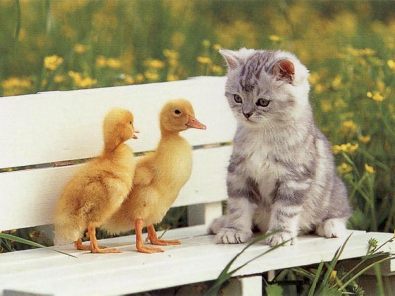 D:\Заставки\Животные\Animals\$ОТ$$О$.JPG
