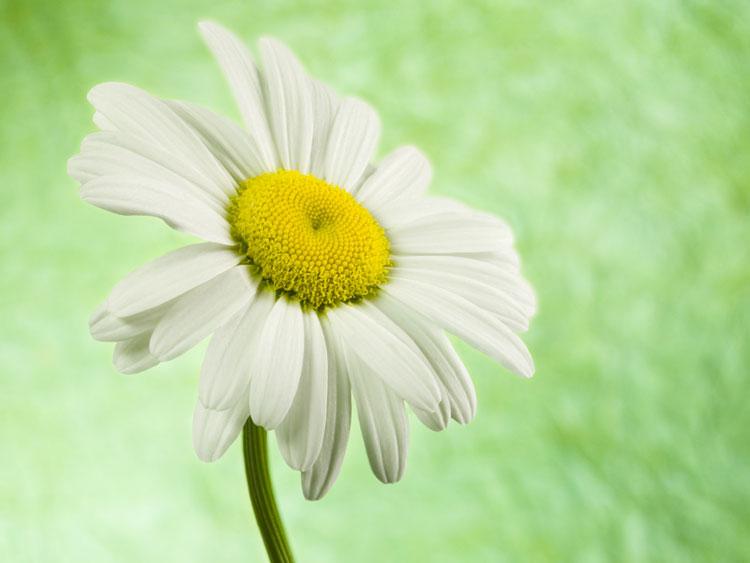 D:\Заставки\Прекрасные цветы\55110380.jpg