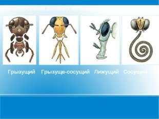 Разнообразие ротовых аппаратов Грызущий Грызуще-сосущий Лижущий Сосущий