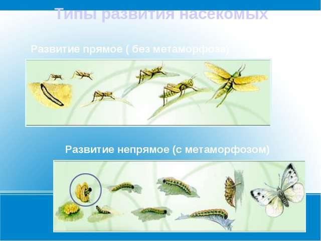 Типы развития насекомых Развитие прямое ( без метаморфоза) Развитие непрямое...