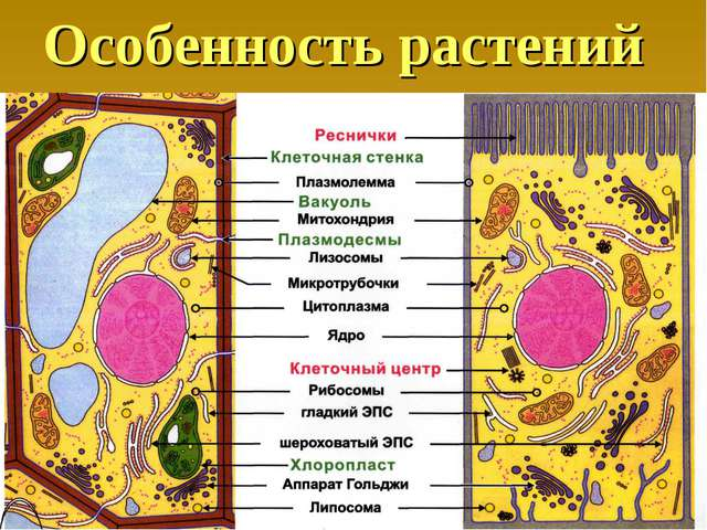 Особенность растений