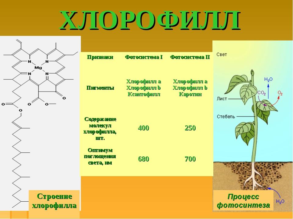 ХЛОРОФИЛЛ Процесс фотосинтеза Строение хлорофилла ПризнакиФотосистема IФото...