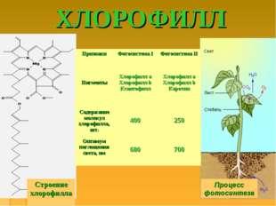 ХЛОРОФИЛЛ Процесс фотосинтеза Строение хлорофилла ПризнакиФотосистема IФото